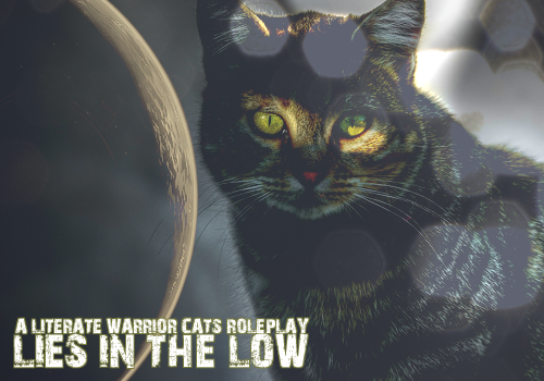 Lies in the Low | Literate Warrior Cats RP B45n6Y